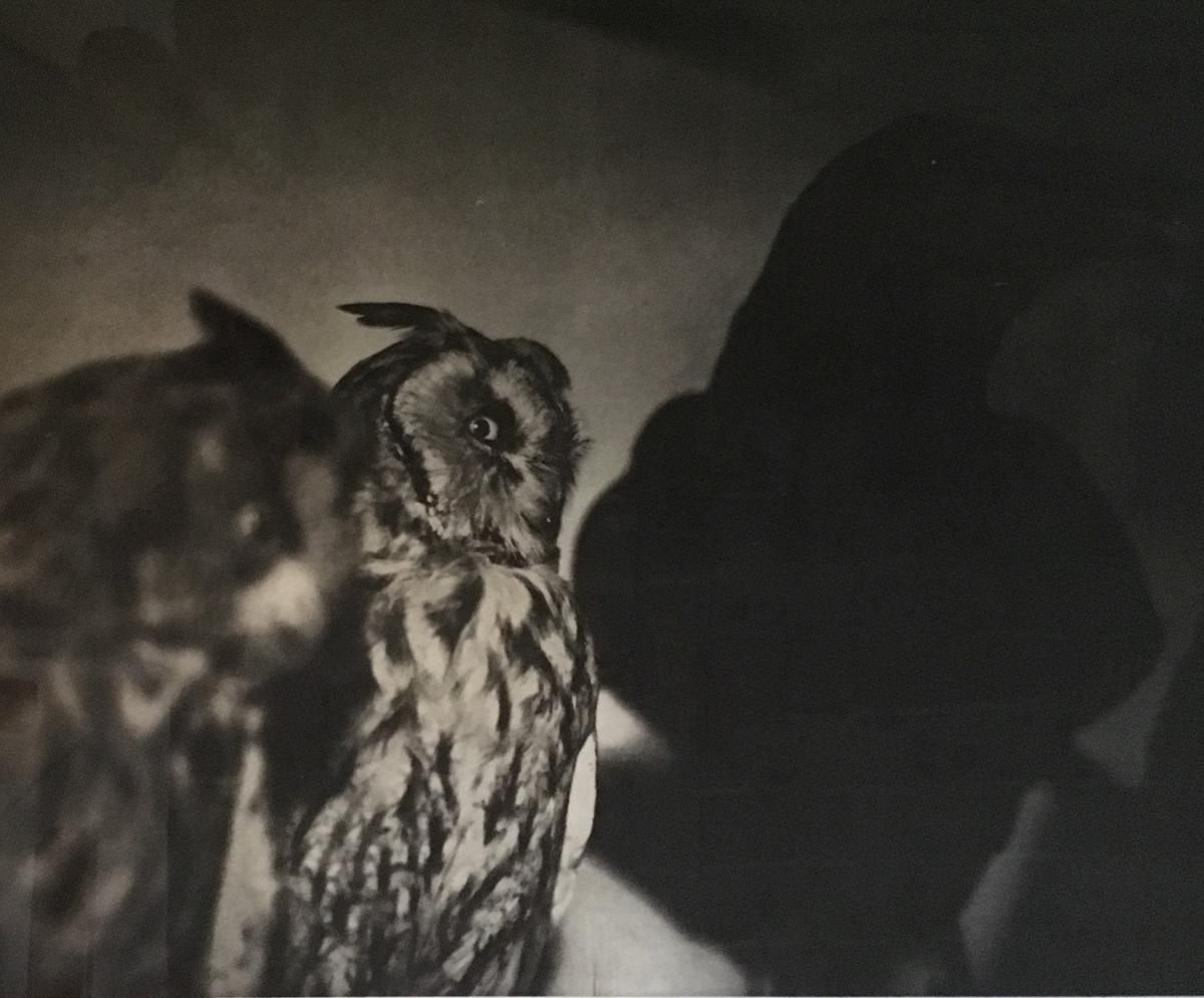 Jim Dine. Berlin as it Was in Winter. Fotografia originale